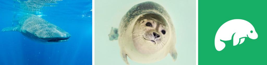 Marine mammals, feat. Studio 3T's very own Hugh the Manatee